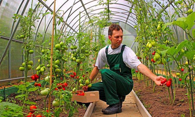 CIGD aziende agricole, modalità pagamento prestazione