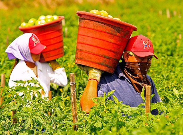 Intermediazione illecita di manodopera e sfruttamento del lavoro